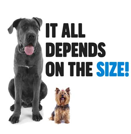 Size Matters, Choose the Right CBD Oil and Treats for you Pet