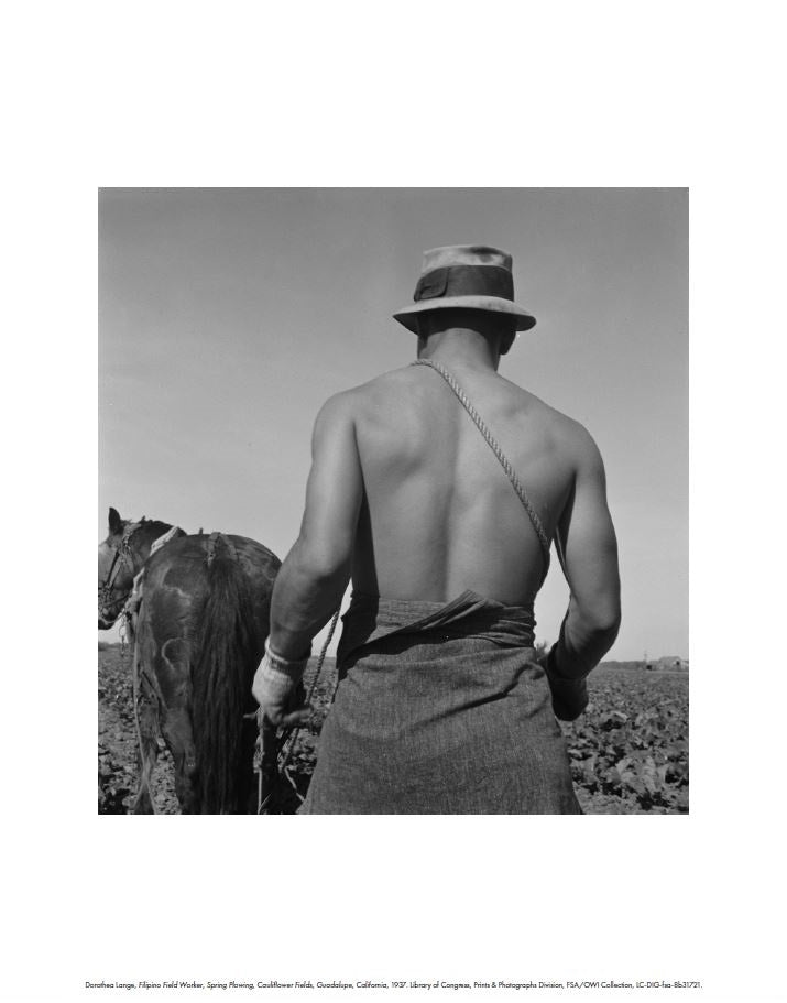Filipino Field Worker by Dorothea Lange: Digital Print