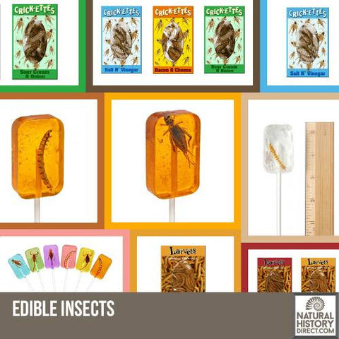 Real Edible Bugs