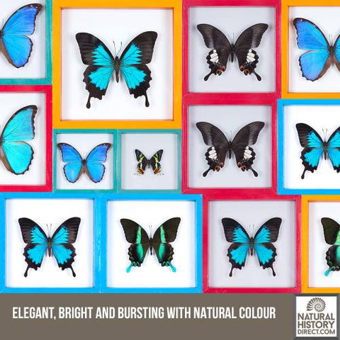 Elegant, bright and bursting with natural colour!