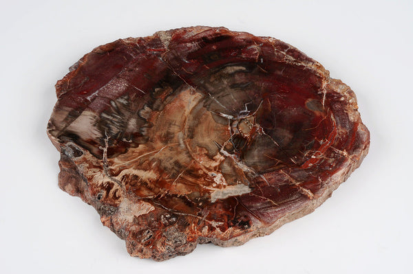 Petrified wood cheese board, unique kitchen tableware, real fossil millions of years old - Natural History Direct Online Shop - 1