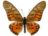 20 X UNMOUNTED BUTTERFLIES, Papilionidae,Graphium rydleyanus - Natural History Direct Online Shop