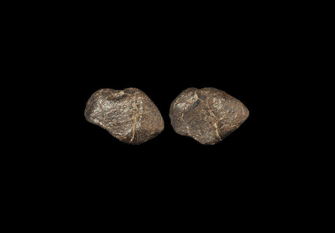 Natural History - Tindouf Fall Meteorite - Natural History Direct Online Shop