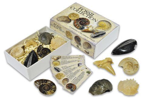 Fossil Collection Box