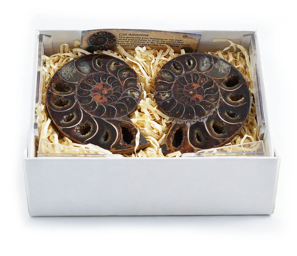 Cut & Polished Ammonite Pair in Gift Box