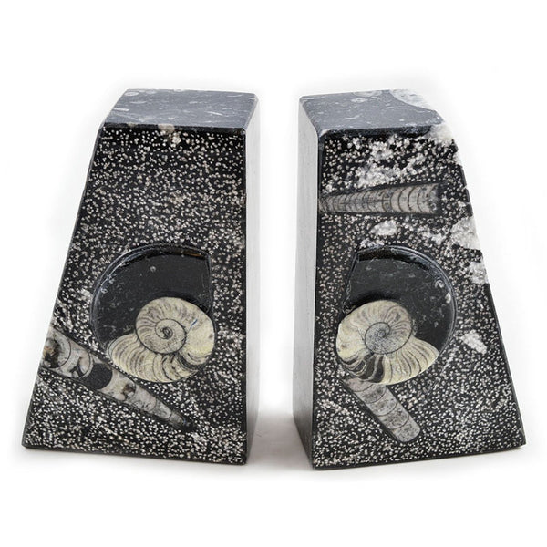 Genuine Fossil Bookends - Choice of sizes and fossils available