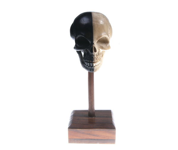 American Buffalo Bone Navajo Carved Skull - Natural History Direct Online Shop