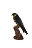 Eurasian Hobby (Falco subbuteo) Taxidermy - Natural History Direct Online Shop - 3