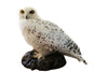 Snowy owl (Bubo scandiacus) Ex Museum Taxidermy - Natural History Direct Online Shop - 3