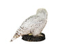 Snowy owl (Bubo scandiacus) Ex Museum Taxidermy - Natural History Direct Online Shop - 6