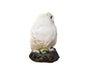 Snowy owl (Bubo scandiacus) Ex Museum Taxidermy - Natural History Direct Online Shop - 7