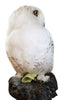 Snowy owl (Bubo scandiacus) Ex Museum Taxidermy - Natural History Direct Online Shop - 9