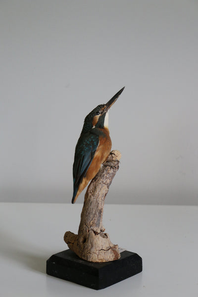 Common Kingfisher 24X10CM