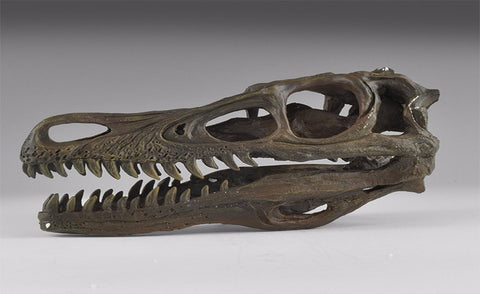 Velociraptor Dinosaur Skull Museum Replica - Natural History Direct Online Shop