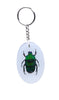 Real Insect Key Rings, KeyChains, Assorted pack of 3 - Natural History Direct Online Shop - 4