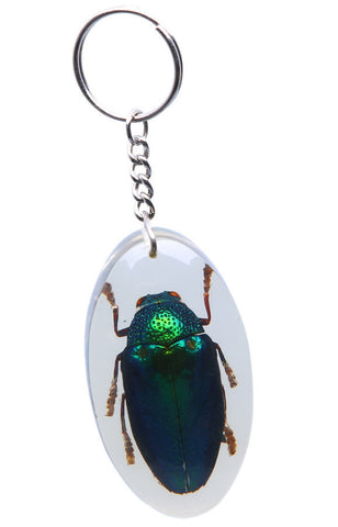 Real Insect Key Rings, KeyChains, Assorted pack of 3 - Natural History Direct Online Shop - 1