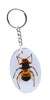 Real Insect Key Rings, KeyChains, Assorted pack of 3 - Natural History Direct Online Shop - 2