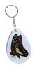 Real Insect Key Rings, KeyChains, Assorted pack of 3 - Natural History Direct Online Shop - 3