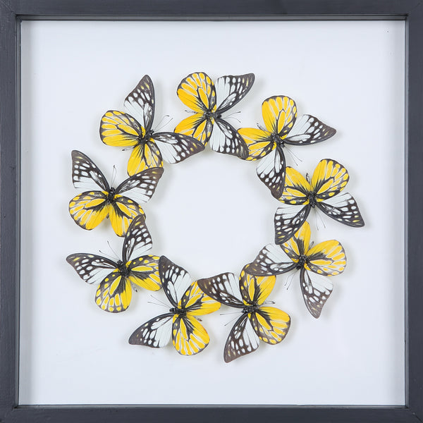 Tropical Butterflies Mounted in a Glass Frame | No.12-025 - Natural History Direct Online Shop - 1