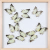 Tropical Butterflies Mounted in a Glass Frame | No.12-027 - Natural History Direct Online Shop - 1