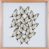 Tropical Butterflies Mounted in a Glass Frame | No.12-086 - Natural History Direct Online Shop - 1