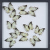 Tropical Butterflies Mounted in a Glass Frame | No.12-098 - Natural History Direct Online Shop - 1