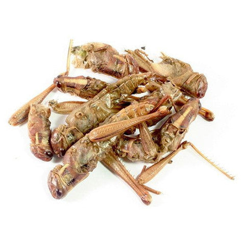 Edible Giant Grasshoppers 5g