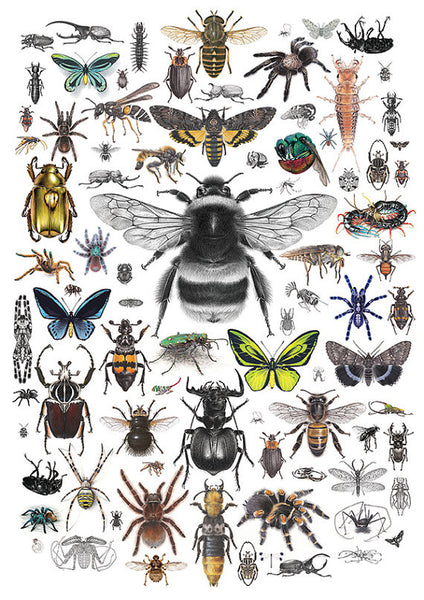 87 Invertebrates A3 limited edition archival art print