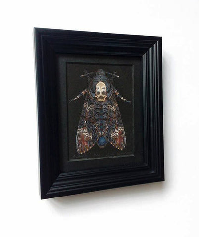 Framed Limited Edition print - Acherontia atropos - Death's Head Moth