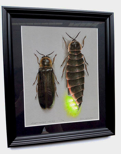 Glow-worms - Framed Archival print