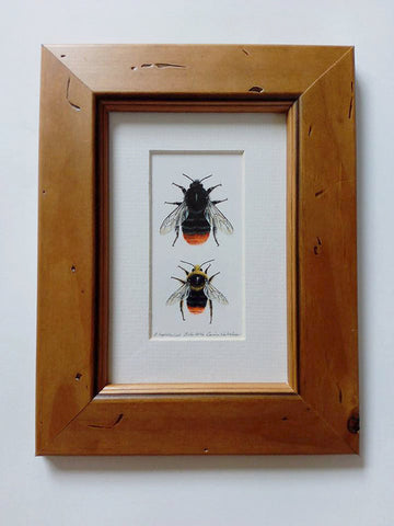 ORIGINAL Framed Artwork - Bombus lapidarius - Queen & Male
