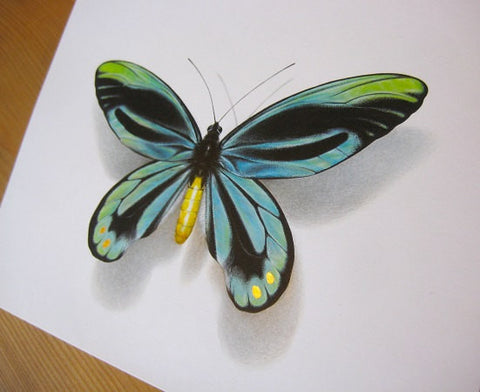 Ornithoptera alexandrae atavus A4 limited edition art print with 22ct.Gold Leaf