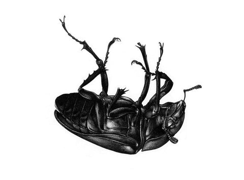 Lucanus cervus A3 limited edition art print - Female