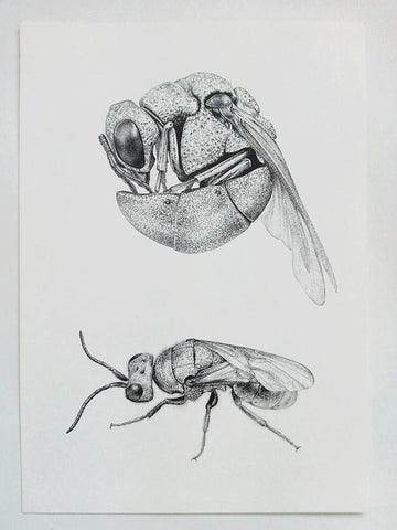ORIGINAL artwork - Cuckoo Wasp
