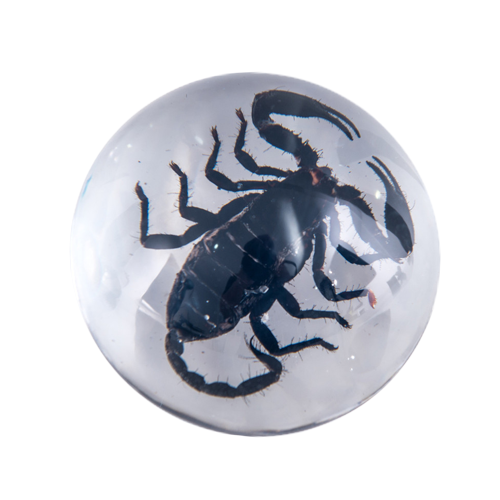 Small Scorpion Paperweight - Natural History Direct Online Shop - 1