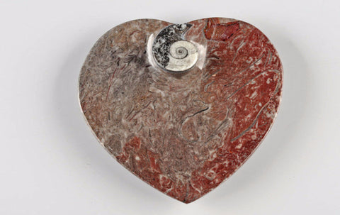 Bowl fossil, heart - Natural History Direct Online Shop - 1