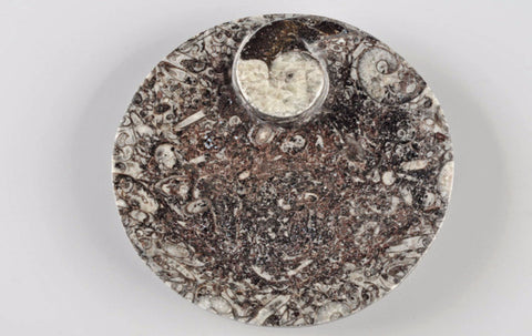 Bowl fossil, round - Natural History Direct Online Shop - 1