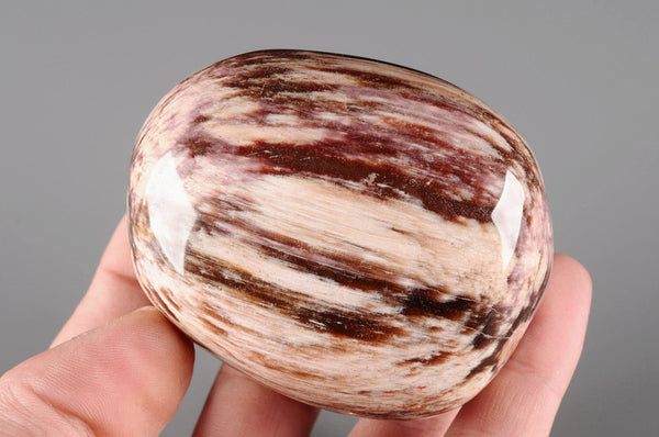 Petrified Wood Polished 1APP 2 - Natural History Direct Online Shop - 1