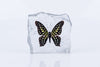 Tailed Jay Butterfly Paperweight #2 - Natural History Direct Online Shop - 2
