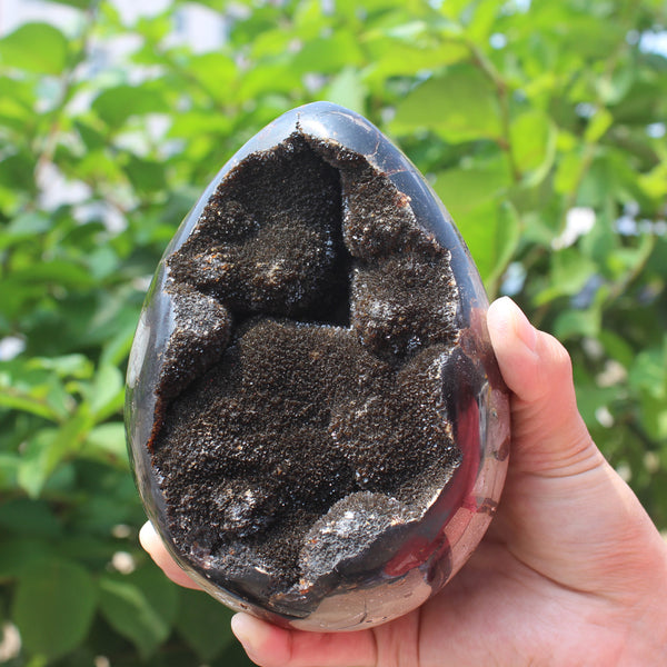 1550g Natural Septarian Fossil