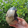 1000g Natural Septarian Fossil