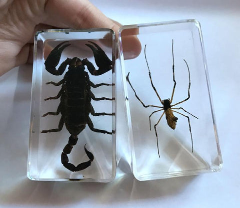 2 Pcs Forest Scorpion & Orb Spider Arachnid Collection Paperweights