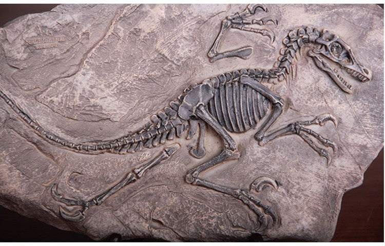 Show me pictures of dinosaur fossils