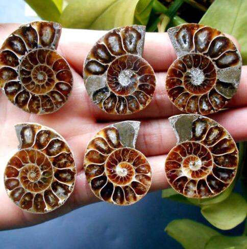 3 pairs of Split Rainbow Ammonite Fossil Specimen Madagascar