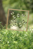 Tropical Butterflies Mounted in a Glass Frame | No.12-027 - Natural History Direct Online Shop - 2