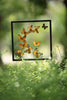 Exotic Butterflies Mounted in a Glass Frame | No.12-008  - Natural History Direct Online Shop - 2