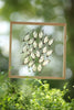 Tropical Butterflies Mounted in a Glass Frame | No.12-086 - Natural History Direct Online Shop - 2