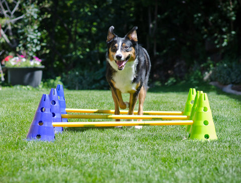 CanineGym® Dog Agility Kit by FitPAWS®