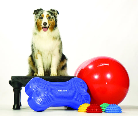 Canine Gym in a Box (Klimb, Regular Size FitBone, Peanut, Paw Pods