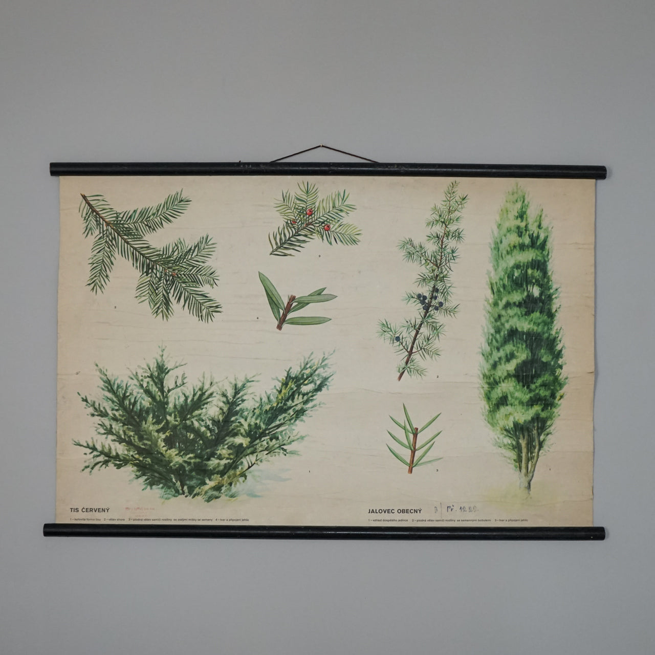 Educational Wall Hanging - Juniper & Red Yew